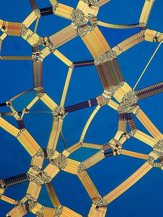 familiar_objects_magnified_640_high_02