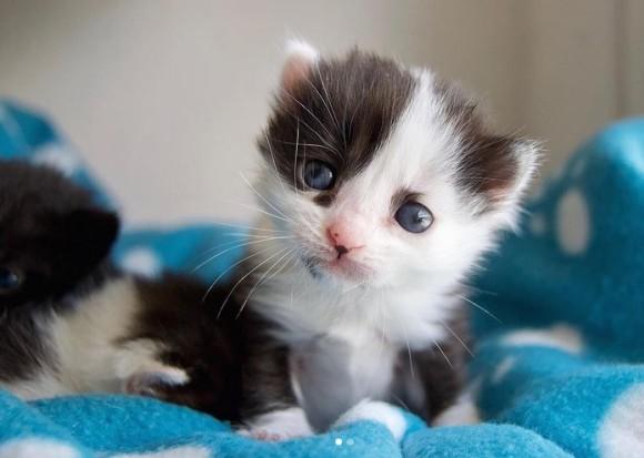 パンダ柄の猫の救助物語