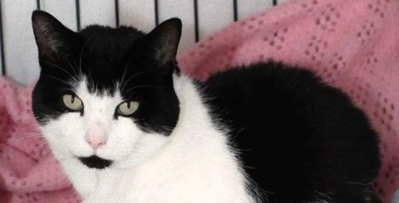 「仲間が危ない!」交通事故で瀕死の重体となっていた猫を探し出し、飼い主に知らせた犬(英国)
