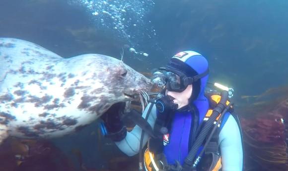 喉を撫でられてうれしそう!ダイバーに甘えたいさかりのアザラシ