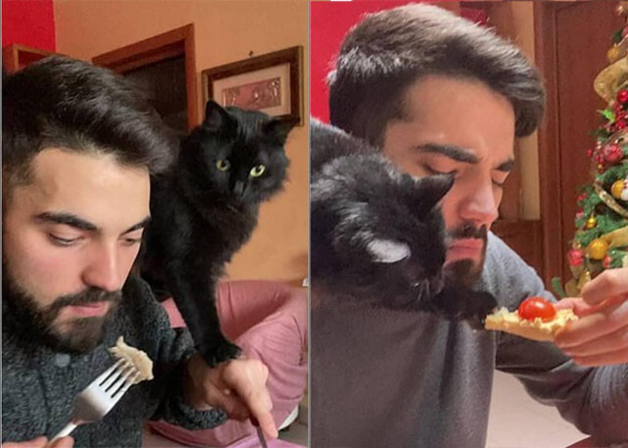 人間の食べ物を奪う忍者猫