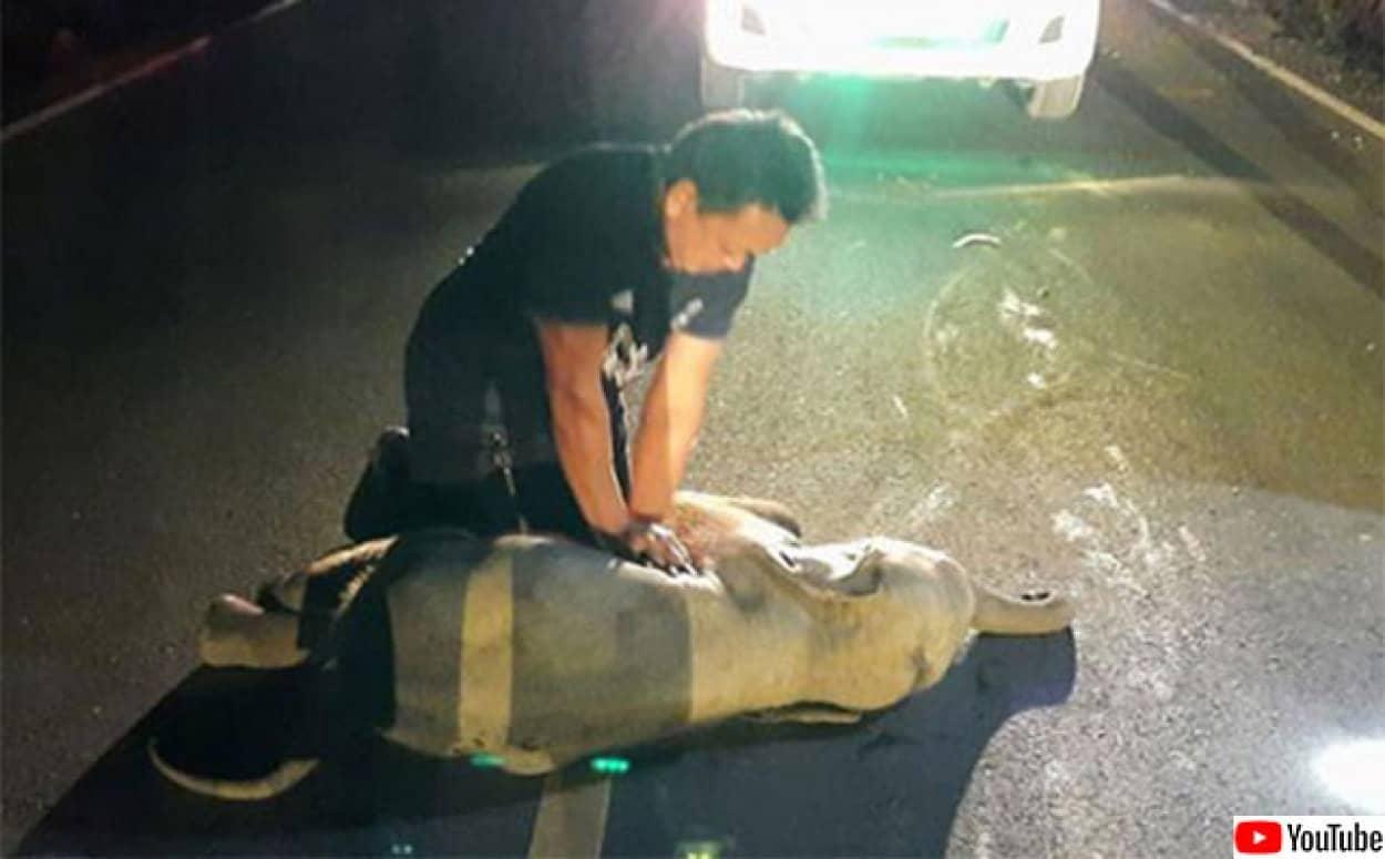 ゾウの赤ちゃんが事故、心臓マッサージで命を吹き返す