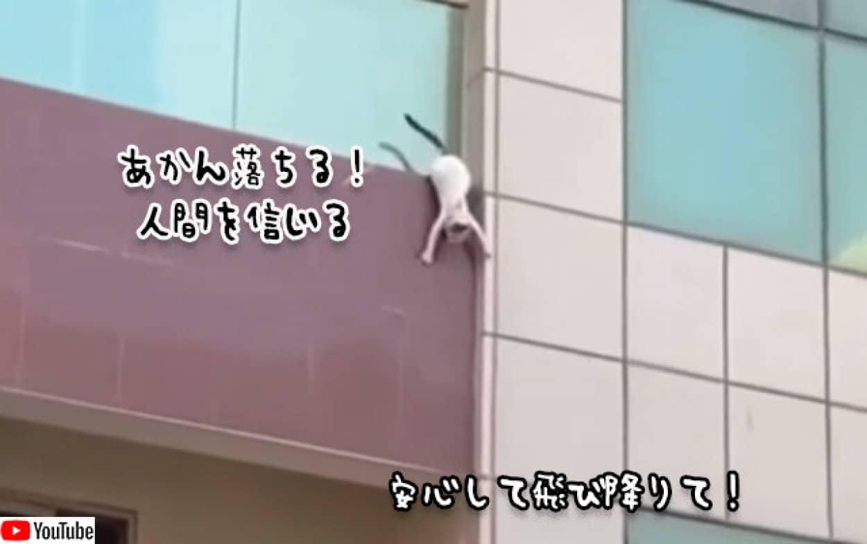 転落寸前の猫を人々が救う。