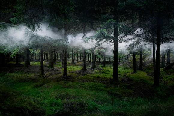 神秘の森に魅せられて。英国の森に魔法をかけた幻想的写真