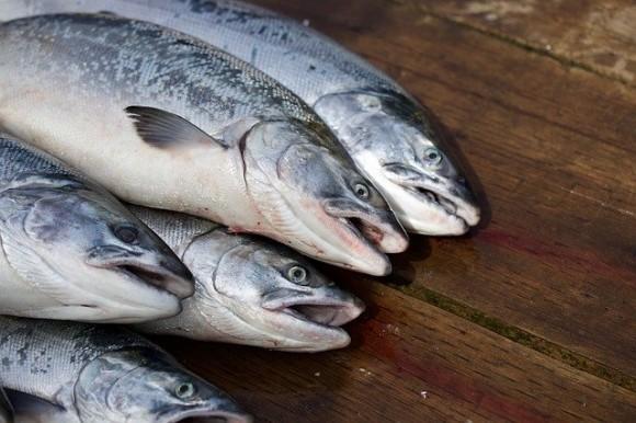 生の魚に潜む寄生虫「アニサキス」が激増中。過去50年間で約280倍に(米研究)