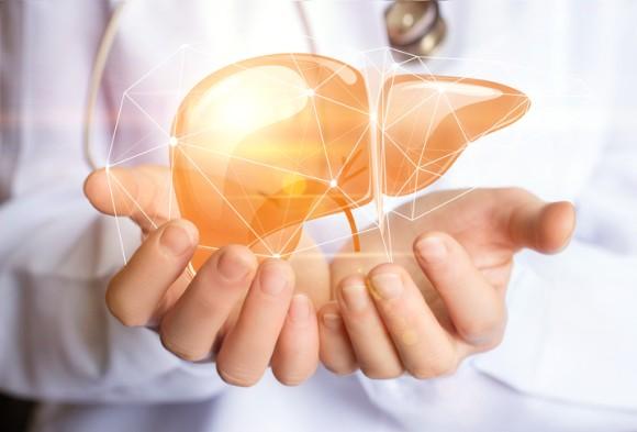 3Dプリンターでちゃんと機能するミニ肝臓の作成に成功(ブラジル研究)