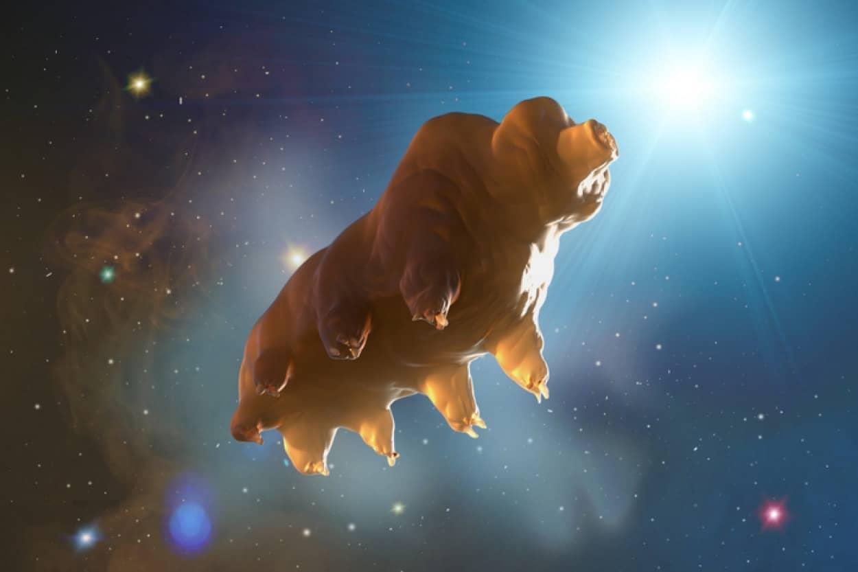 人類の宇宙進出に向け、クマムシとダンゴイカが宇宙へと送られる