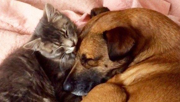 てんかんに苦しむ犬の守護天使となった保護猫。常に寄り添い発作を察知、飼い主に知らせる。