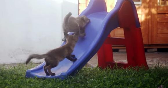 萌え殺しキツネ、2匹の子キツネが滑り台できゃっきゃうふふ
