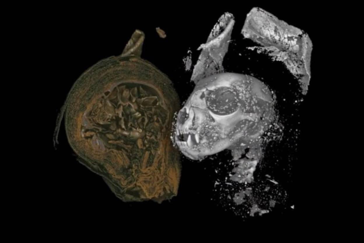 マイクロCTスキャンで見た古代エジプトのネコのミイラの内部
