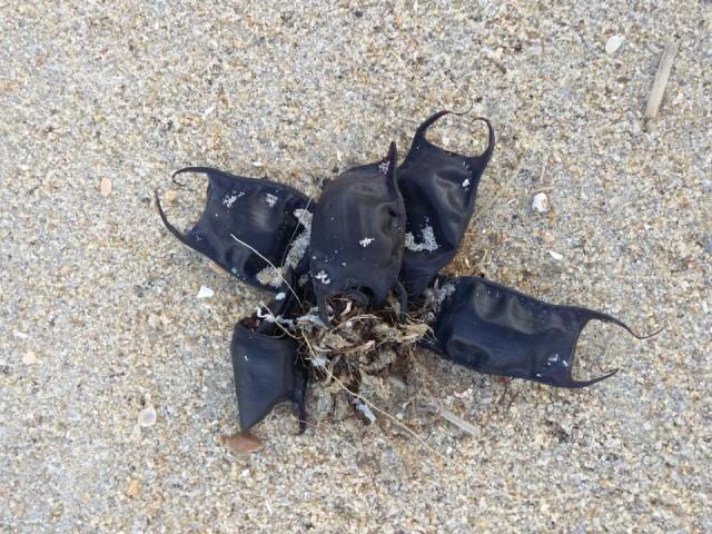 海岸に打ち上げられた黒い袋状の謎の物体。その正体は?(アメリカ)