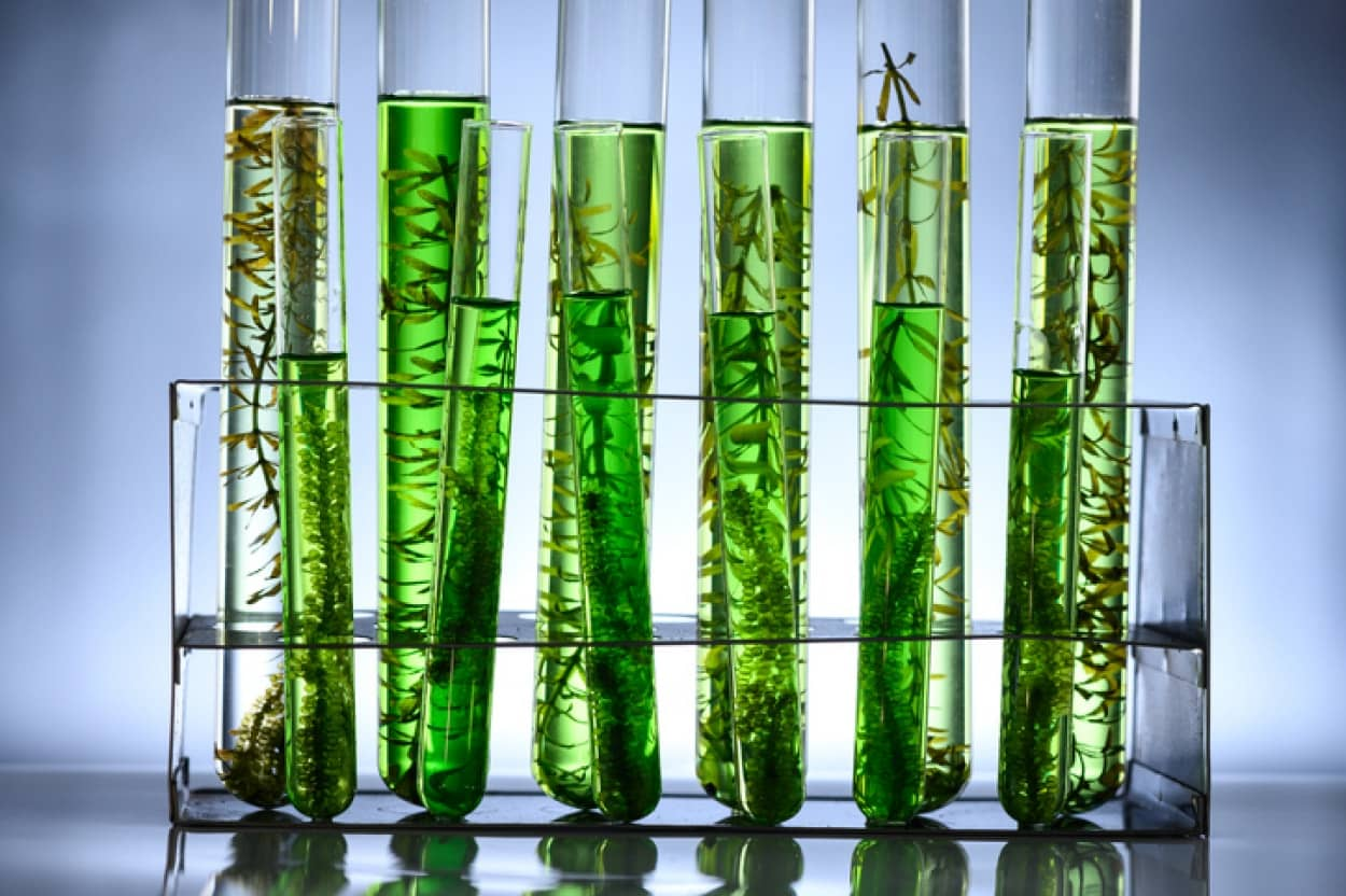 藻を利用してビールを鋳造、排出される二酸化炭素を削減