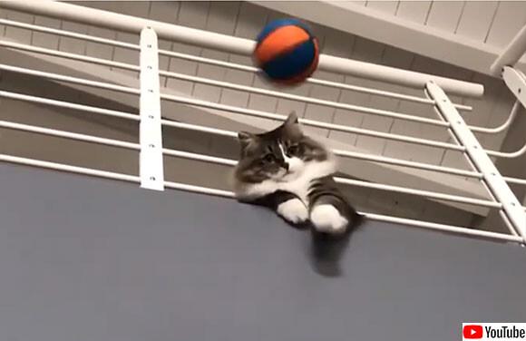 驚異のキャッチ率。ゴールキーパーとして高い能力を発揮する猫(イタリア)