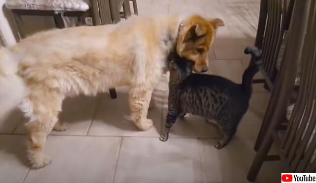 目の見えない犬の帰宅を誰よりも待ち望んでいたのは大親友の猫だった