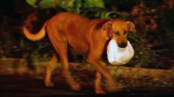 お腹を空かした動物たちの為、3年間毎日、自分がもらった餌を口にくわえて運び続ける犬(ブラジル)
