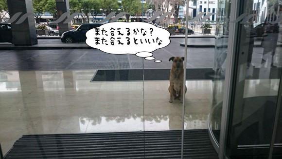 もう一度あの人に会いたい。渡航先で出会った野良犬はホテルの前でずっと彼女が出てくるのを待っていた。そして数か月後・・・やっぱりその犬は待ち続けていた!