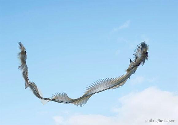 これはすごい!鳥の飛行軌跡を撮影したら大空を舞う巨大生物に変貌を遂げた