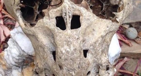 こ、これは!?ロシアでナチス軍の秘密結社のブリーフケースと奇妙な形状の頭蓋骨が発見される。宇宙人的な何かなのか?