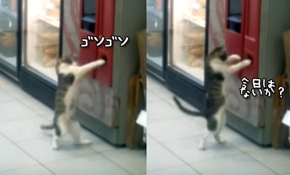 自動販売機の釣銭を狙う泥棒猫