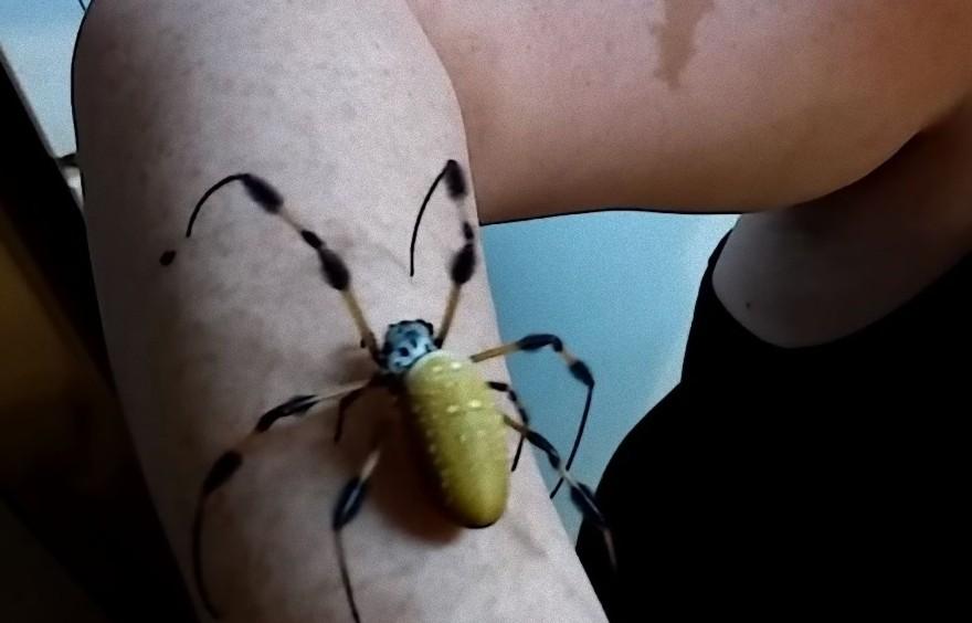 spider7_e