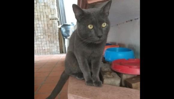 二重生活を送っていた猫。別宅では別の名前で呼ばれ、とてもかわいがられている事実がついに判明(メキシコ)