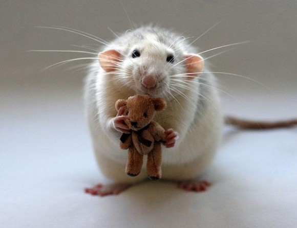 rats-with-teddy-bears-ellen-van-deelen-2_e