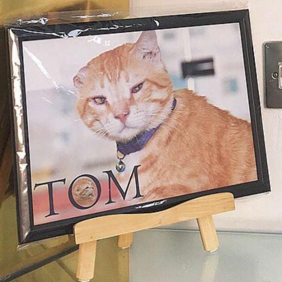 tom-4 [www.imagesplitter.net]