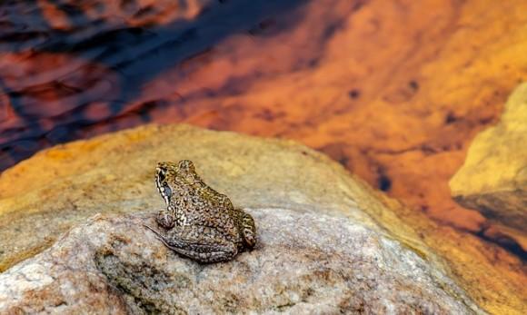 frog-3903773_640_e