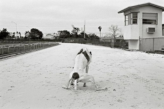 old_dogs_12