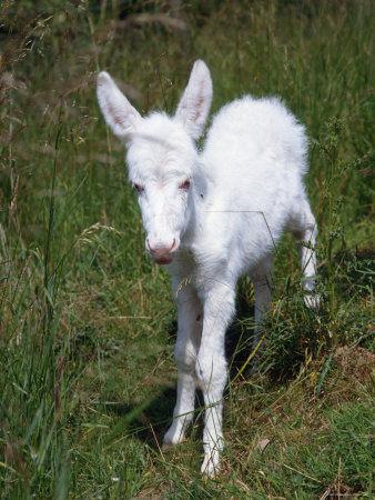 albino-25
