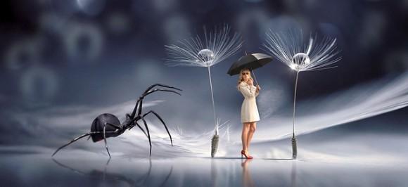 お前はオレを怒らせた。気候変動がクモを攻撃的にさせるという研究結果(カナダ研究)※クモ出演中