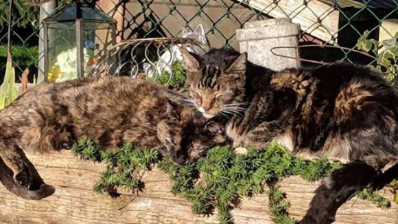 持病を持った猫たちの為の特別な保護施設(カナダ)