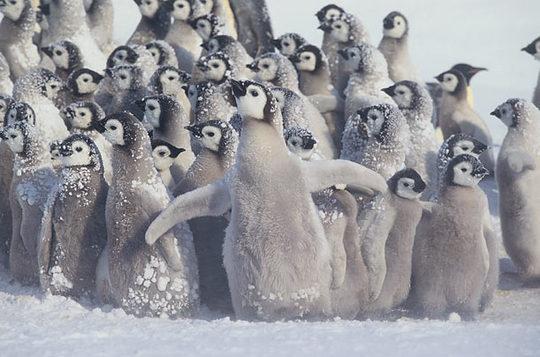 penguins_02