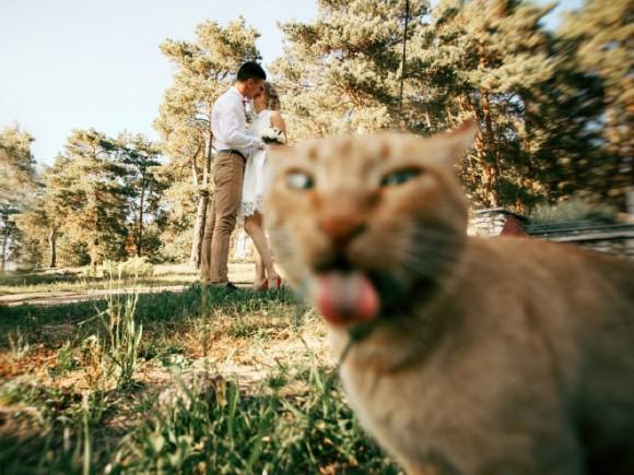 晴れの良き日とか人間事だし。結婚式の写真に写り込む動物たちのいる風景