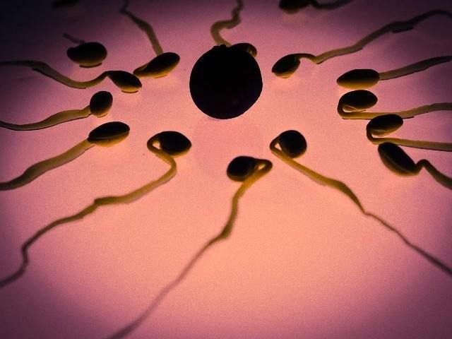 sperm-956482_640_e