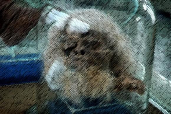 岩塩坑で発見された古代イランの塩漬けミイラ「ソルトマン」(※ミイラ出演中)