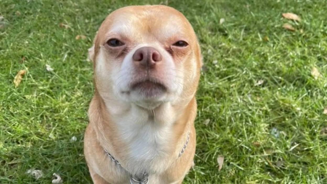 「男性と子供と動物が大嫌いで神経質な犬です」保護犬の正直すぎる里親募集広告が逆に注目を集める(アメリカ)