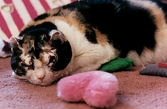 例えその身が焼かれようとも、炎の中に5回飛び込み5匹の子猫を助け出した母猫の物語(アメリカ)