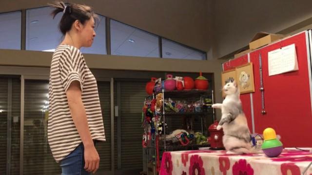 猫は見て学んでいた。猫が人間の動きをマネできることが科学的に証明される(ハンガリー研究)