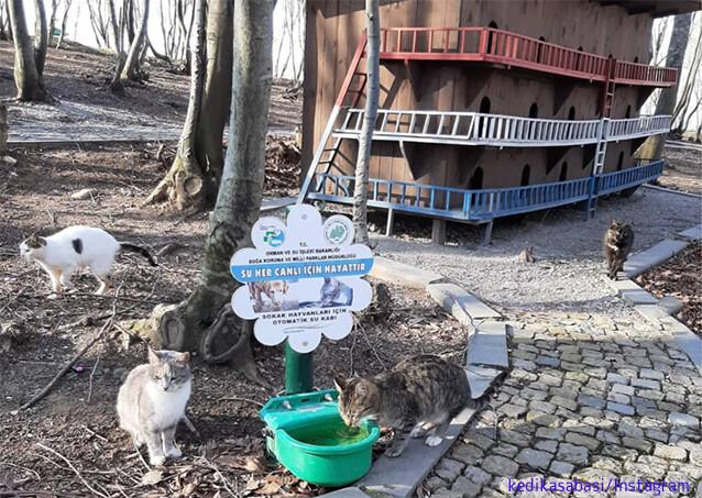 猫の国トルコには、ホームレス猫専用の素敵な宿泊施設が複数存在する