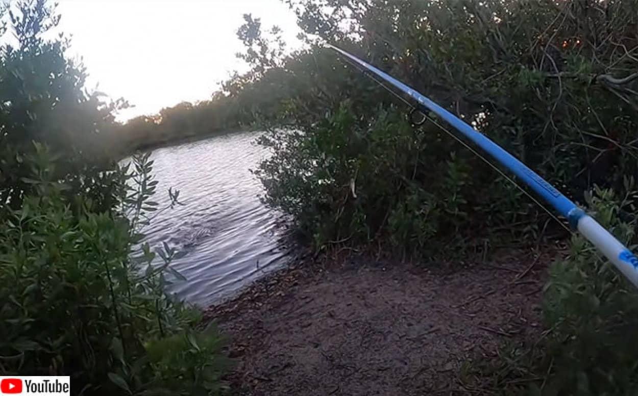 釣りをしていたらワニに追いかけられる