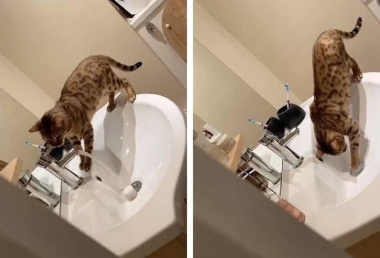 猫の悪知恵で家が水浸しに