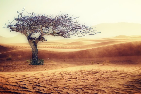 飢饉や干ばつ、海面上昇など、気候変動により2050年までに1億4000万人以上が移動を余儀なくされる可能性(世界銀行)