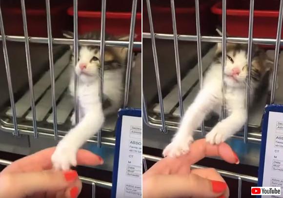 行くにゃ!その手をもっとよこせ!保護施設の子猫にロックオンされた女性。この攻撃は回避不能