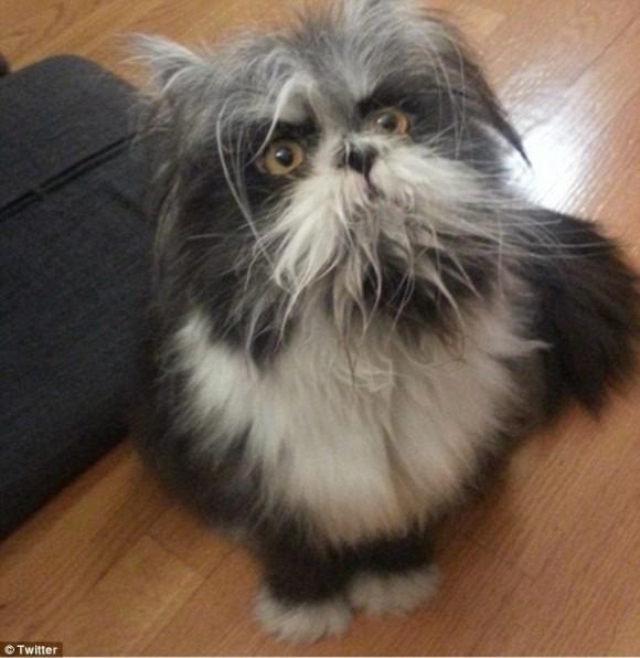 見た人は皆、「犬?猫?どっち?」と聞いてくる、アチュームさんの犬化がさらに進む。
