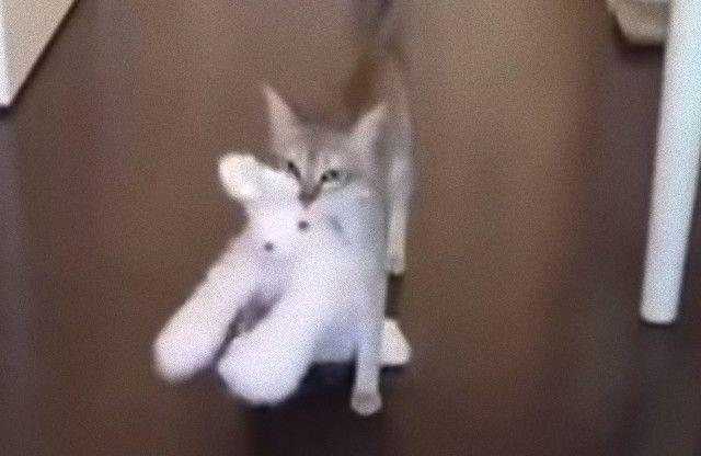 どこに行くにもいっしょだよ!大好きなウサギのぬいぐるみを放さない猫