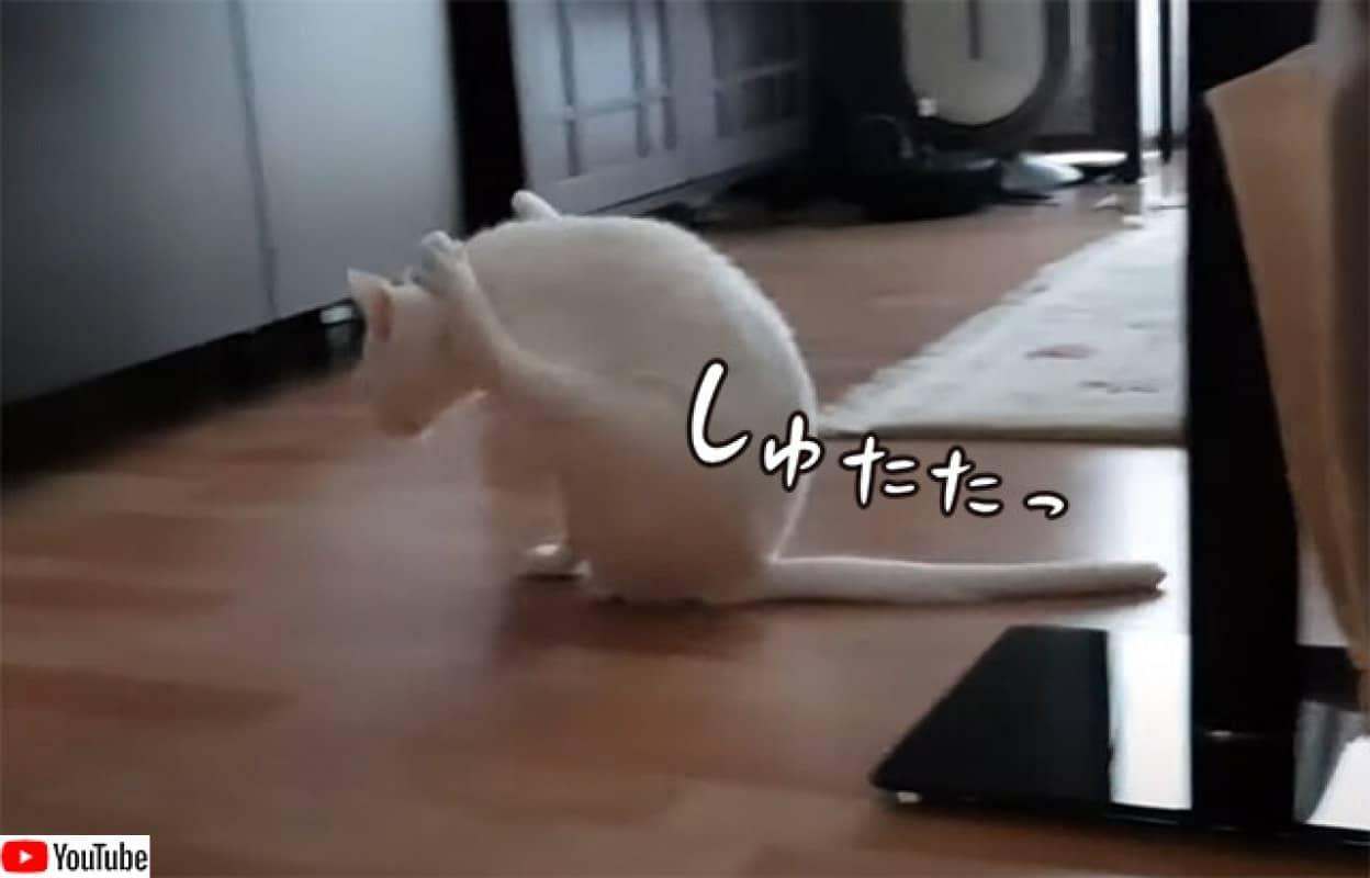 猫オリンピック、お尻徒競走