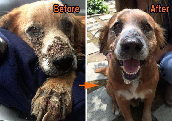 命絶え絶えに生きていた捨て犬たちが保護された後、瞳に輝きが戻るとき。捨て犬たちのビフォア・アフター Part2