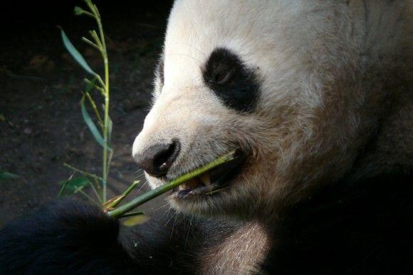 zoo-77816_1920_pixabay_e