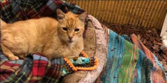 ファミリーレストラン「デニーズ」の店先で10年間暮らしている猫。スタッフと客のやさしい心遣いで特別の家が設けられる